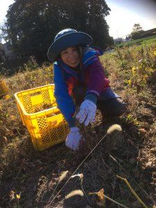 自然栽培大豆の収穫に行ってきました