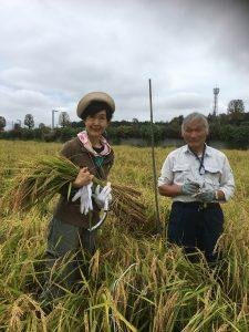 稲刈りと収量調査@栃木のご報告