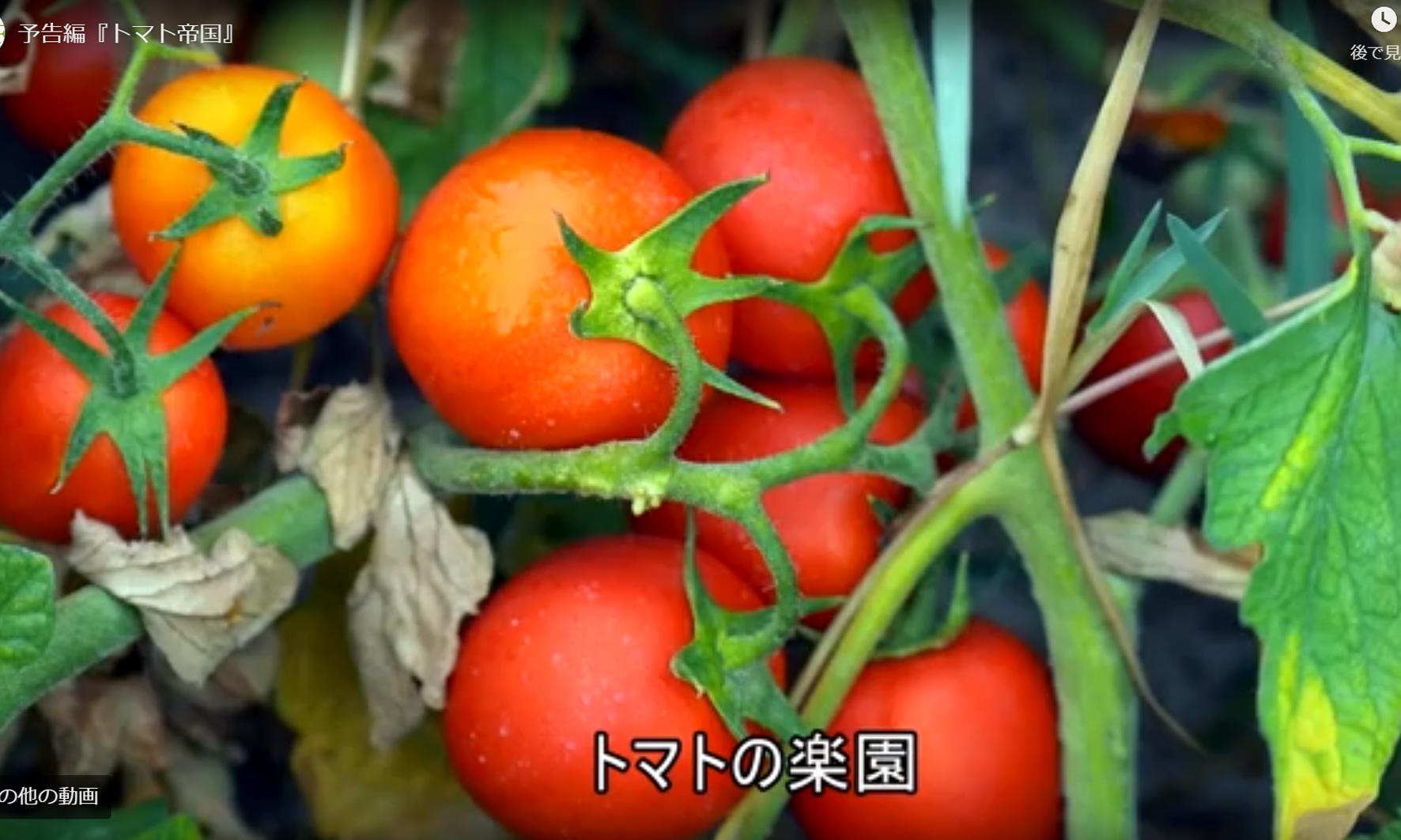 トマトの楽園