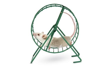 車輪を回すねずみiStock-177262522
