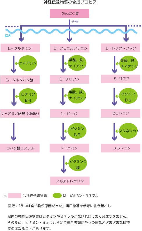 神経伝達物質の合成プロセス
